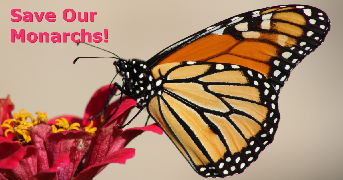Save Our Monarch Butterflies